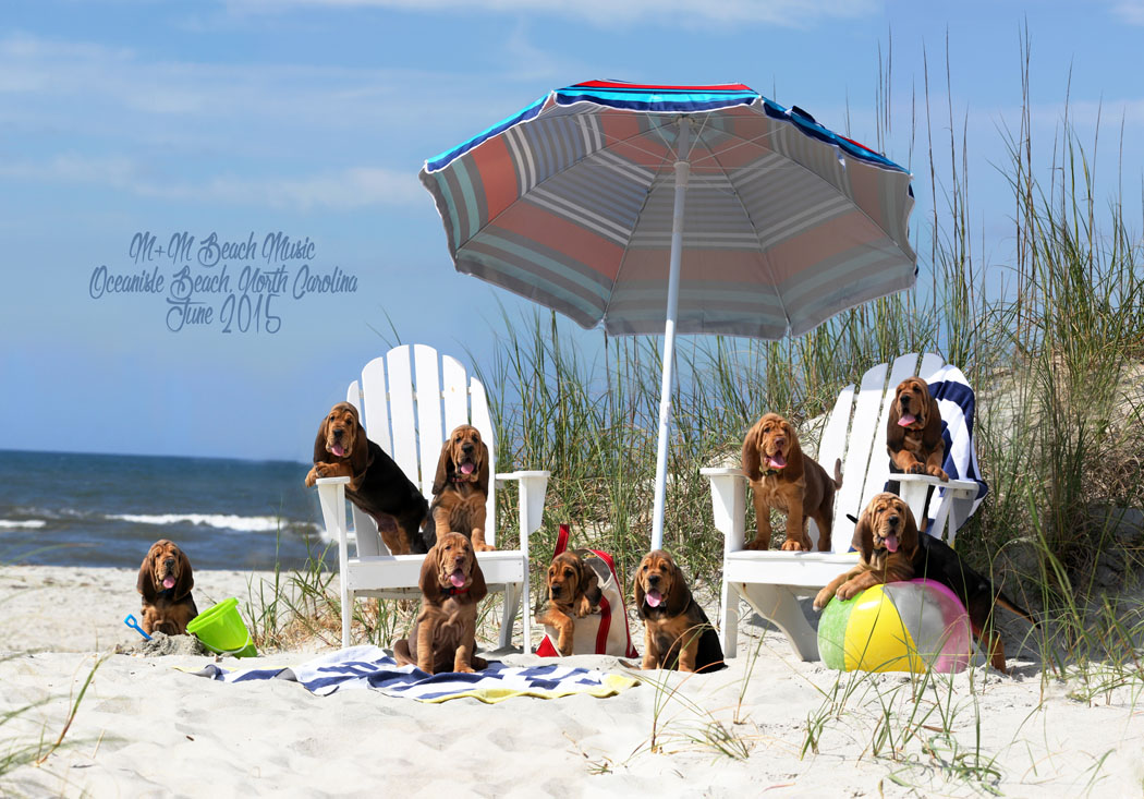 NorthCarolinaBeachGroupnamed resize.jpg