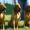 p1040277-red-girls-paisley-ella-tater.jpg