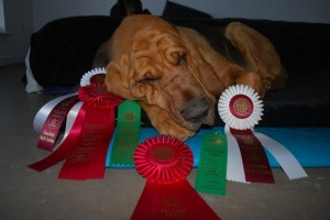 Price snoozing after all that hard work to earn these ribbons!