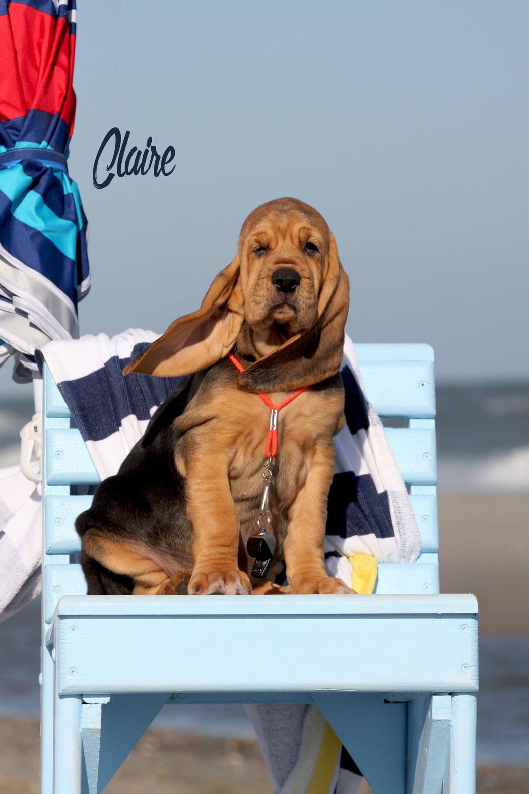 Claire.jpg