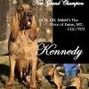 Kennedy ABC ad.