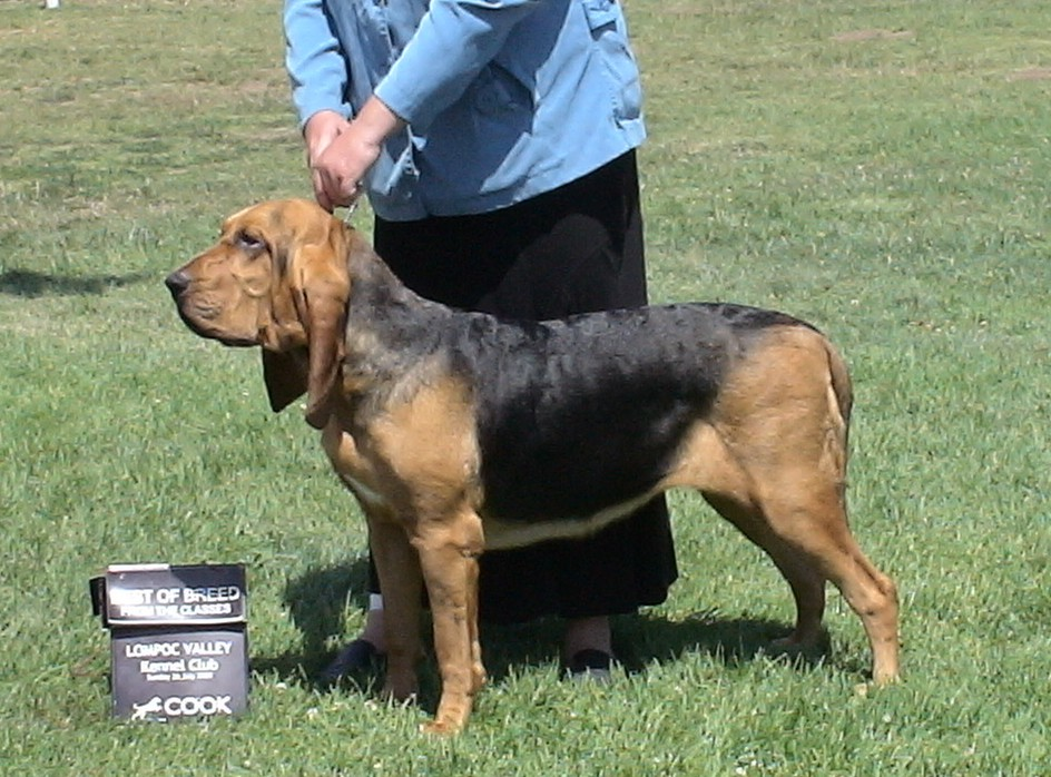 Best of Breed over 5 specials from 12-18 month class - 4 point major!