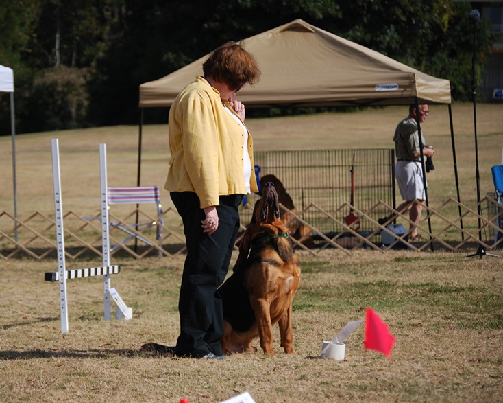 Beautiful Attention in the Rally Obedience Ring!