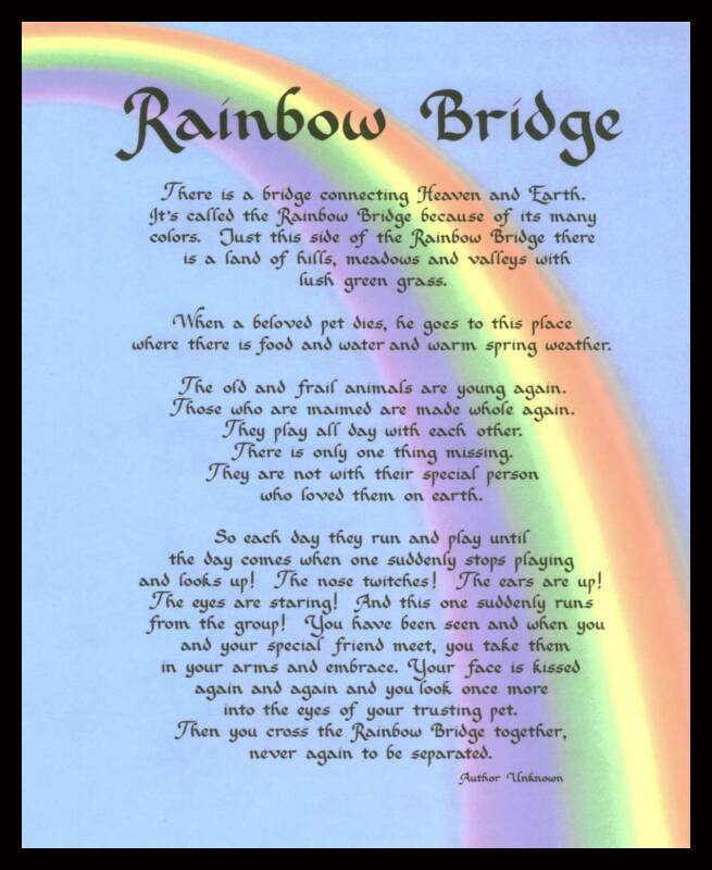 RainbowBridge_op_655x800