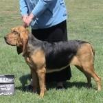 dogshowlompoc0101