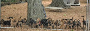 puppy-line-up-for-web1